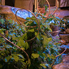 Plantswoman Design - Issaquah Landscaping_1094