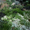 West Seattle Nursery - Devonshire Landscaping_7055