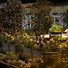 Susan Browne Landscape Design - Perennial Lawn and Garden_7027