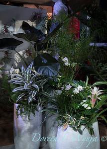 West Seattle Nursery - Devonshire Landscaping_7042