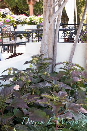 'G13532'; Dahlia; Dahlia variabilis; Dahlightful; Dahlightful™; GAP PHOTOS; Lively Lavender
