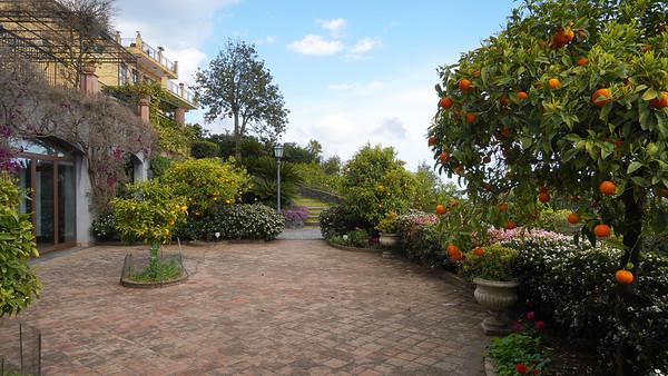 Giulia's garden in Catania