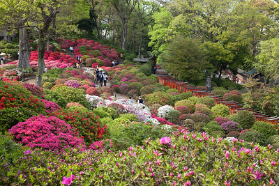 Azalea Garden at Nezu-Shrine