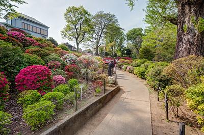 Azalea Garden at Nezu-Shrine