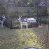 1.15.11 -- put cold frame out today