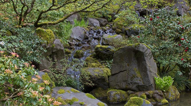 Cascade & rhododendron