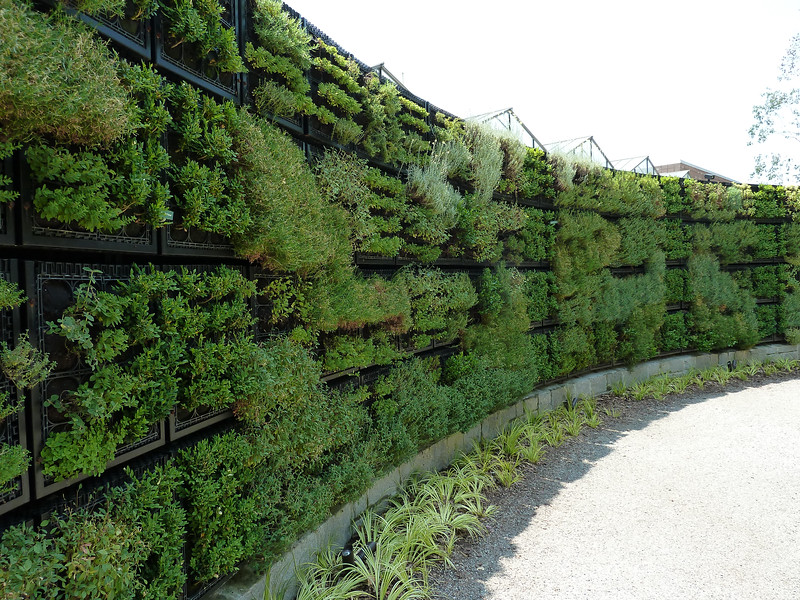 Herb wall. The wall has a built-in irrigation system.