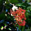 """Atlanta Botanical Gardens<br /> 1345 Piedmont Avenue NE<br /> Atlanta, Georgia 30309<br /> Official website: <a href=""""http://www.atlantabotanicalgarden.org"""">http://www.atlantabotanicalgarden.org</a><br /> <br /> (photo taken 7/26/2014)<br /> <br /> My Homepage: <a href=""""http://www.Godschild.smugmug.com"""">http://www.Godschild.smugmug.com</a>"""