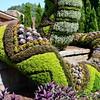 """""""COBRA"""" (bottom)<br /> <br /> Atlanta Botanical Gardens<br /> 1345 Piedmont Avenue NE<br /> Atlanta, Georgia 30309<br /> Official website: <a href=""""http://www.atlantabotanicalgarden.org"""">http://www.atlantabotanicalgarden.org</a><br /> <br /> (photo taken 7/26/2014)<br /> <br /> My Homepage: <a href=""""http://www.Godschild.smugmug.com"""">http://www.Godschild.smugmug.com</a>"""