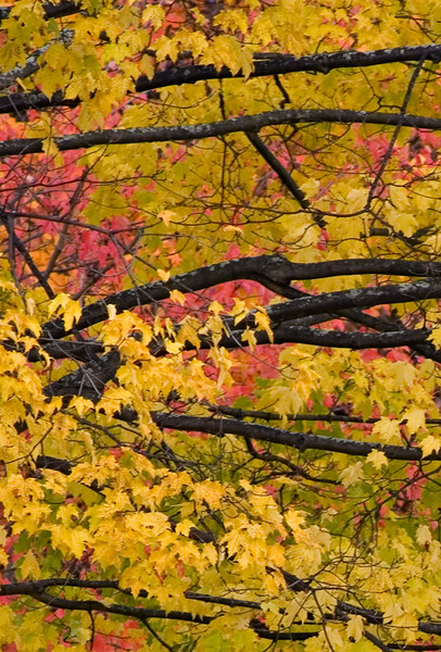 FALL COLOURS IN MONTPELIER, VERMONT, OCTOBER