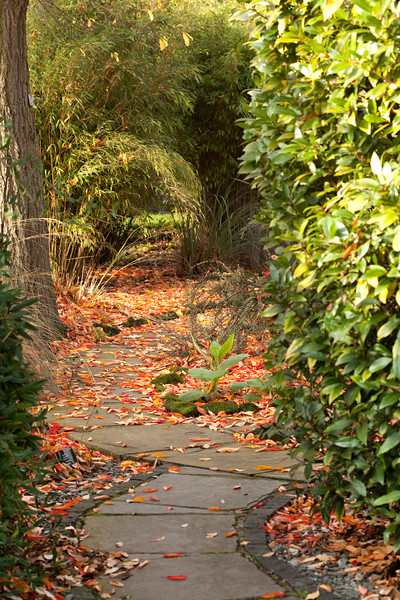 autumn leaves at Winterbourne Botanic Garden