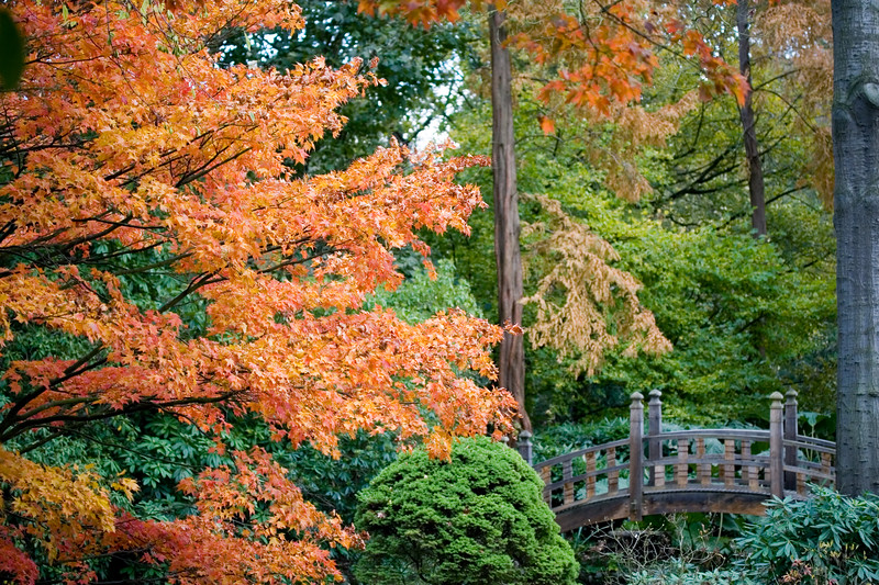 VIEW OF JAPANESE BRIDGE, WINTERBOURNE BOTANIC GARDEN, BIRMINGHAM UNIVERSITY, NOVEMBER