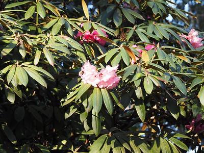 Spring - Botanical Garden