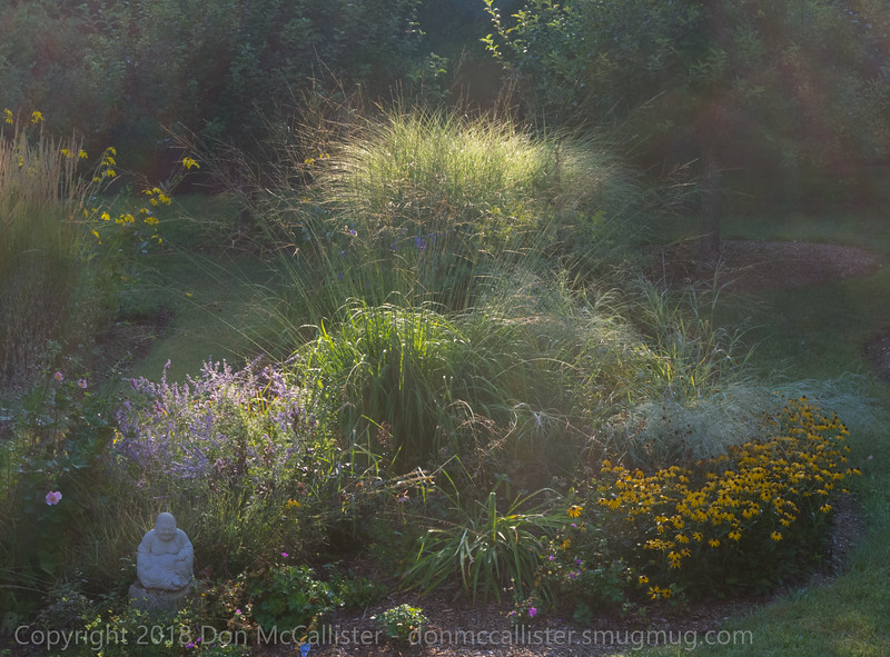 Meadow garden, early morning, late summer