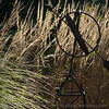 Armillary and grasses