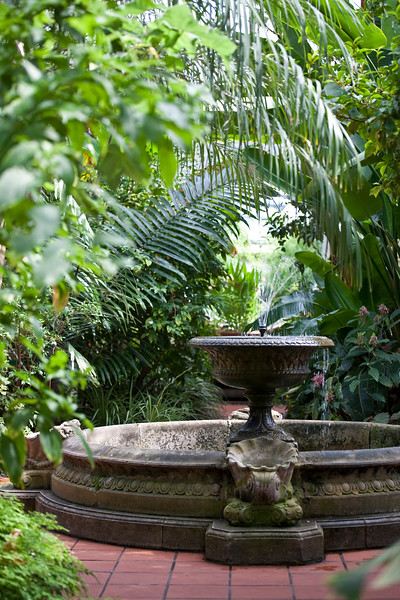 view of fountain in Tropical House at Birmingham Botanical Gardens