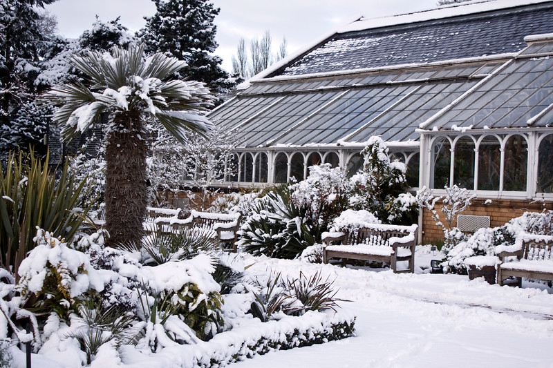 Birmingham Botanical Gardens in snow, Loudon Terrace