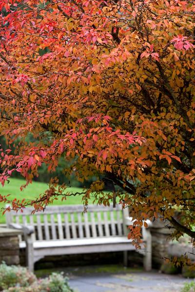 Prunus Incisia 'Kojo-No-Mai'