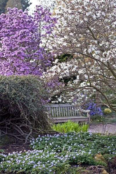 Birmingham Botanical Gardens in Spring