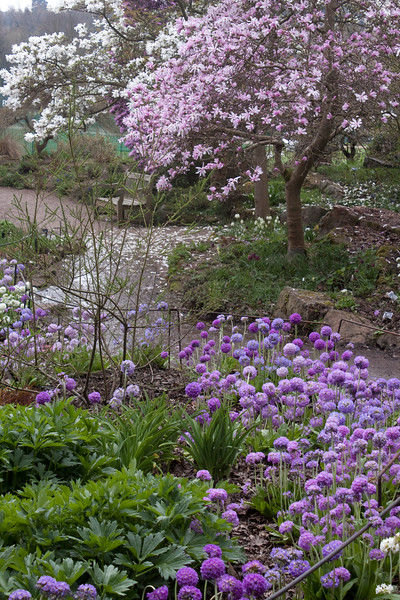 view of Magnolias at Birmingham Botanical Gardens
