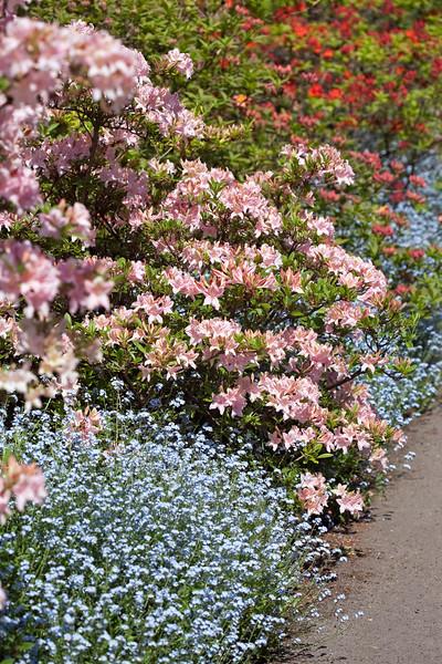 Birmingham Botanical Gardens view of Azalea Walk