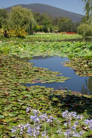 Blue Lotus 1_12
