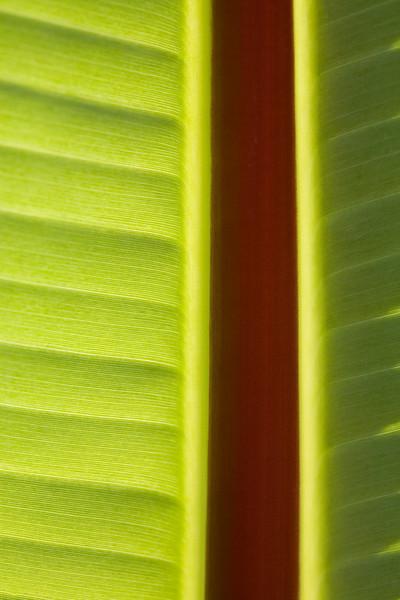 Banana7129
