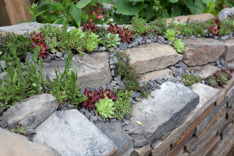 Get Well Soon, Artisan Garden, with serpentine wall made of stone and render and embellished with slate, and mixed sempervivums,
