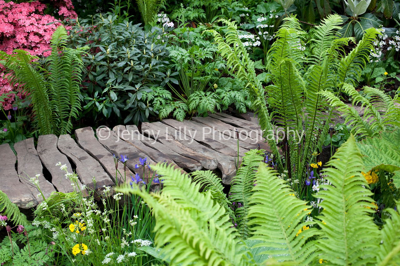Furzey Gardens, Chelsea Flower Show 2012, Designer Chris Beardshaw, a woodland garden celebrating the beauty of ericaceous plants and shrubs