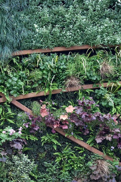 Stoke-On-Trent's Story of Transformation, featuring Living Wall designed by GreenGraphite, and a decorative slate wall, English Rose 'Munstead Wood', dryopteris erythrosora, Geum 'Prinses Juliana,' heuchera palace purple, heuchera 'Ginger Ale'; Worfield Gardens Wholesale Nursery