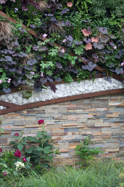 Stoke-On-Trent's Story of Transformation, featuring Living Wall designed by GreenGraphite, and a decorative slate wall, English Rose 'Munstead Wood', heuchera palace purple, heuchera 'Ginger Ale';