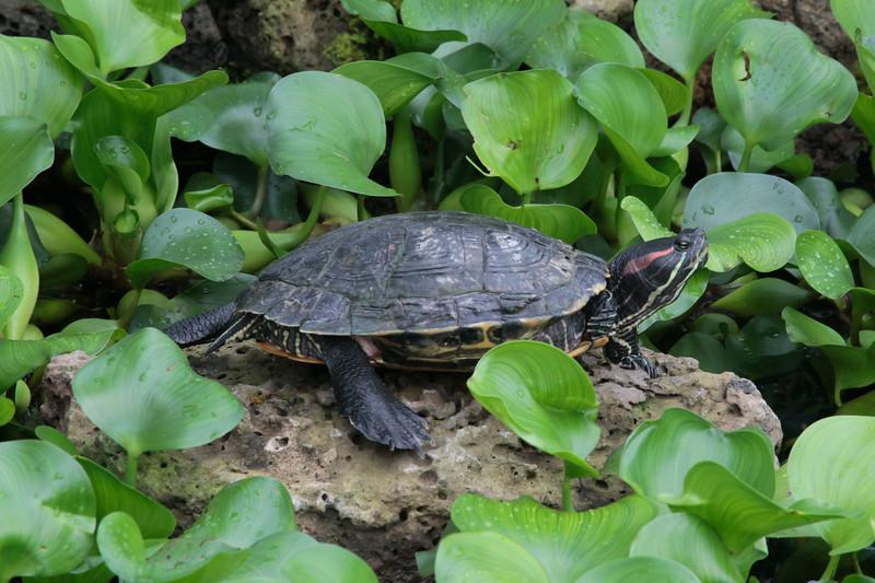 Turtle8580