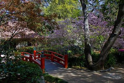 Japanese red bridge at Descanso Gardens
