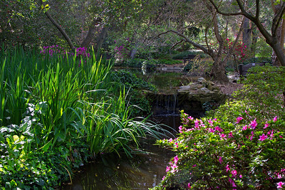Waterfall creek at Descanso Gardens