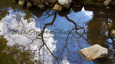 Reflections at Descanso Gardens