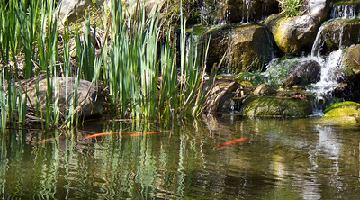Koi waterfall at Descanso Gardens