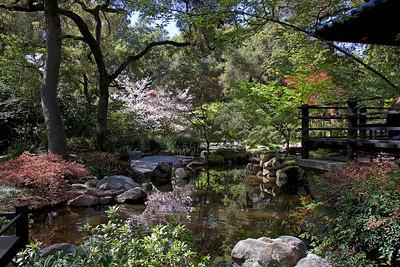 Pagoda & pool at Descanso Gardens