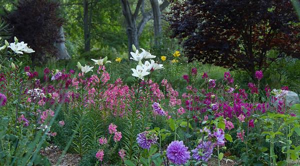 Stargazer lily at Descanso Gardens