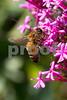 Bee2349