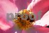 Bee3295