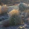 Meadow garden on a frosty morning #2