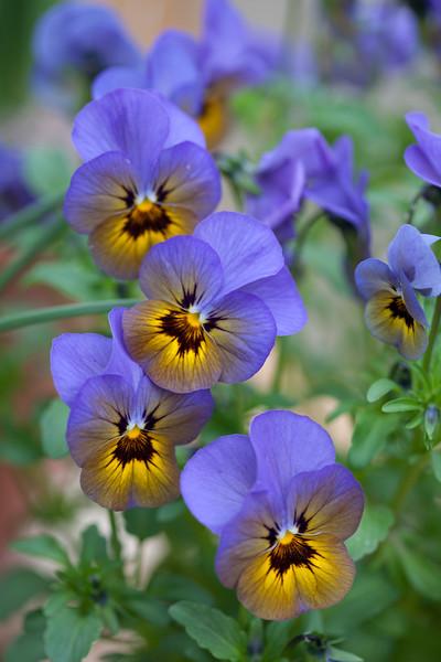 Viola' Marlies'