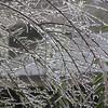 freezing rain  3.3.14