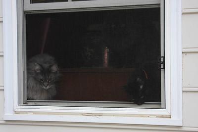 Quincy & Dexter