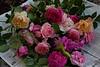 garden_May07-6366