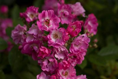 garden_May07-6346