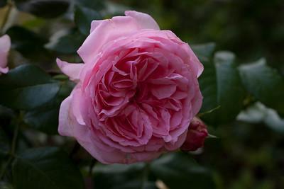 garden_May07-6337
