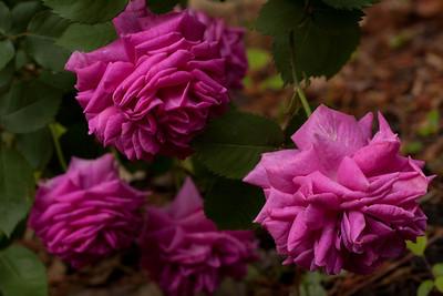 garden_May07-6355