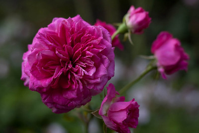 GardenMay06-6279