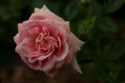 garden_May07-6303